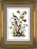 Жак Шартон (J. Charton). Экзотические цветы и птица из Индии